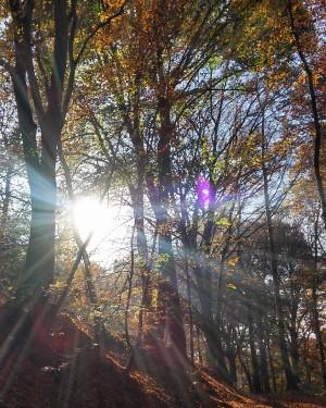 bos bomen zon